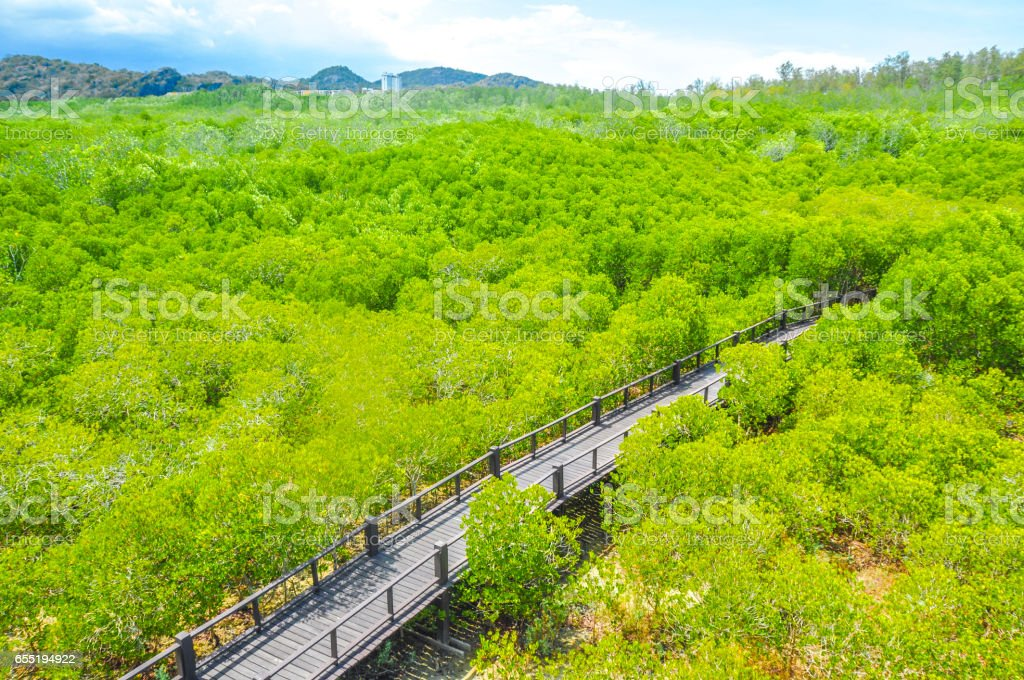 Walkway with wooden bridge through mangrove forrest stock photo