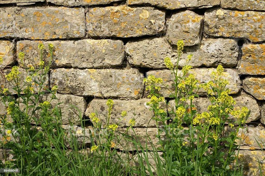 Wall Behind Yellow Flowers royalty-free stock photo