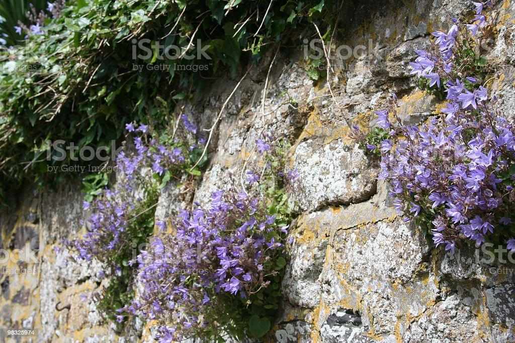 Parete fiori foto stock royalty-free