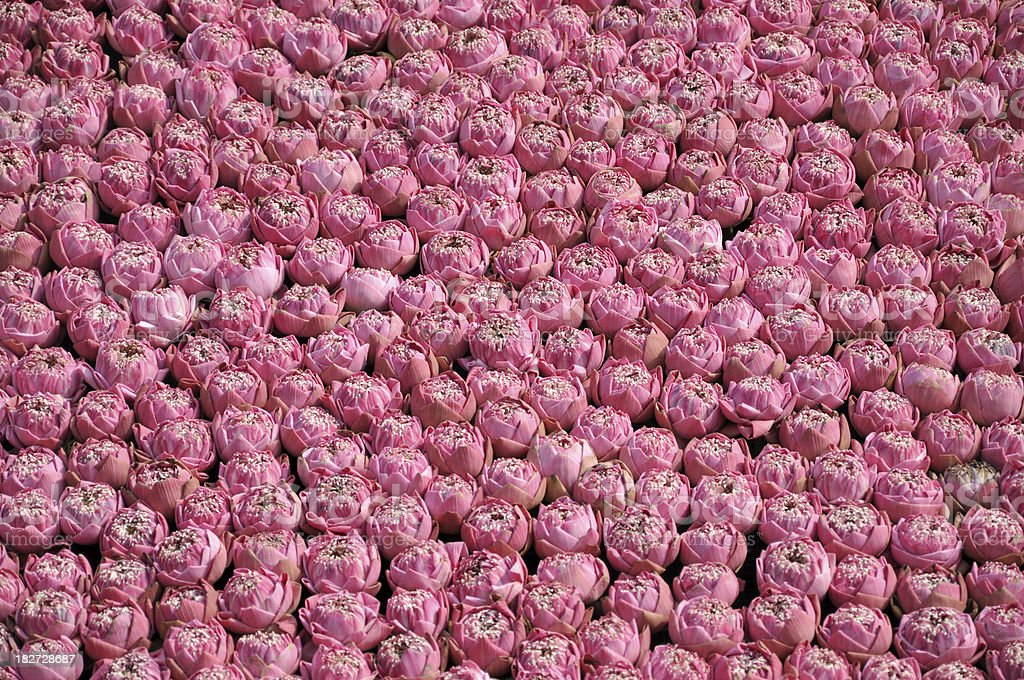 Wall Full of Pink Flower stock photo