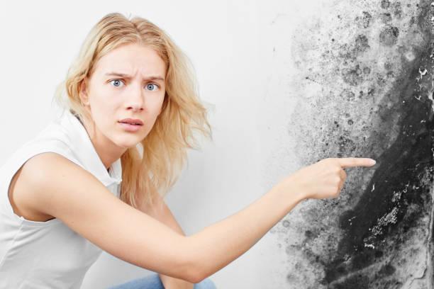 Wandpilz. Aspergillus. Ein schönes Mädchen in einem weißen T-Shirt zeigt mit dem Finger auf den schwarzen Schimmel an der Wand.