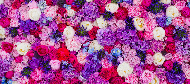 Wall made of roses different colours background picture id533151665?b=1&k=6&m=533151665&s=612x612&w=0&h=rpuhhyf2eami4bas318mokwoagdmdnpbn8kpfj5jiyi=