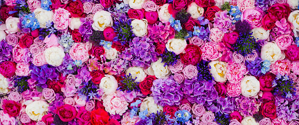 Wall made of roses different colours background picture id533151673?b=1&k=6&m=533151673&s=612x612&w=0&h=4dtmjedjtdilercydgwwttrgzua zvjktxe8lszjkxc=