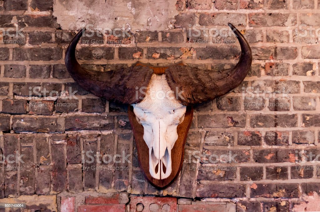 Wall mounted Ox skull with brick Background stock photo
