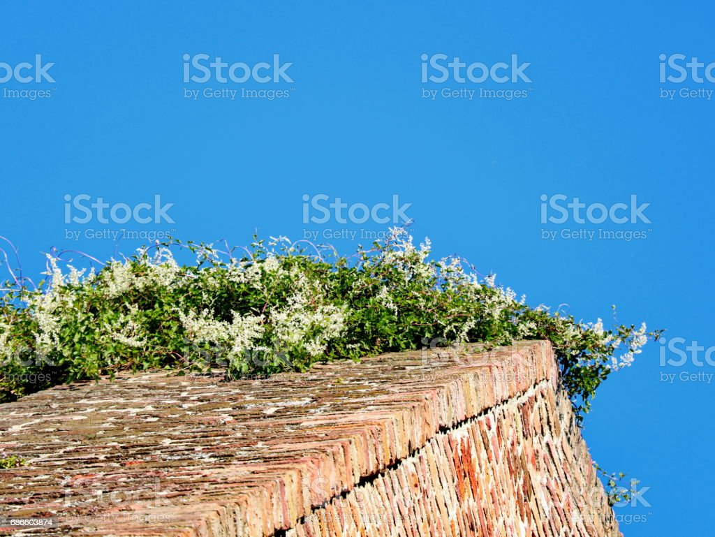 A wall of bricks and tiny flowers on it royalty-free stock photo