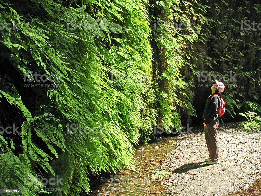 Wall of ferns stock photo