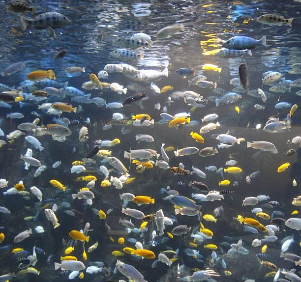 Wall of Fish stock photo