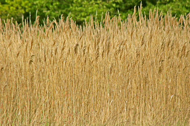 Wall of Grass Texture stock photo