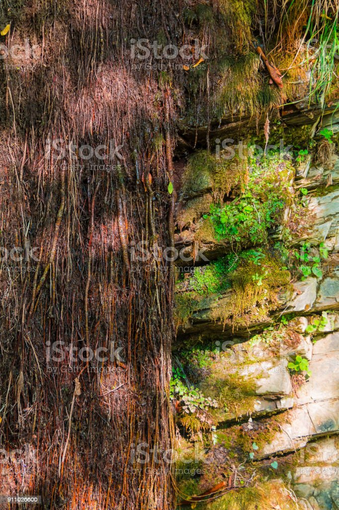 Wall Of Mountain With Vegetation In Sunny Autumn Day Stock Photo Download Image Now