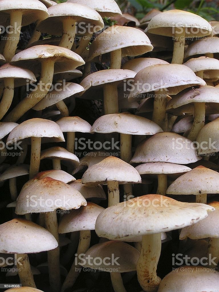 Wall of mushrooms royalty-free stock photo
