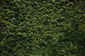 wall of natural moss