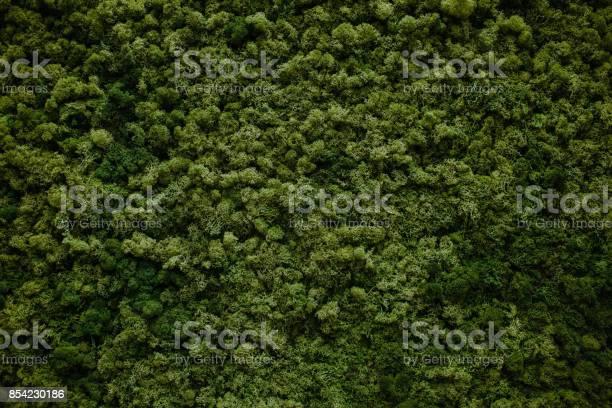 Wall of natural moss picture id854230186?b=1&k=6&m=854230186&s=612x612&h= lp1kj380po3kqhl47aladrb0mfstnl4rfbpf3sskhe=