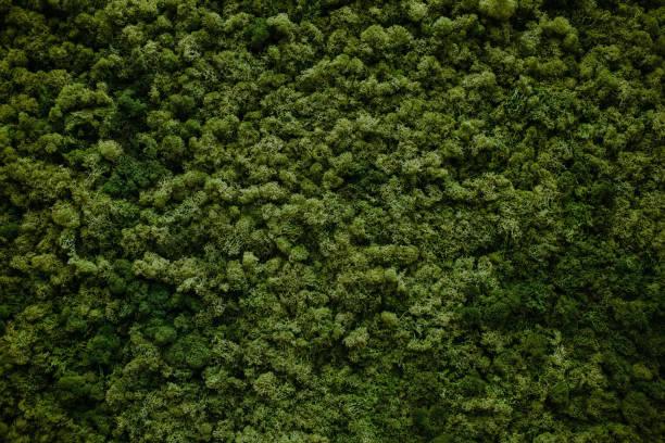 Wall of natural moss picture id854230186?b=1&k=6&m=854230186&s=612x612&w=0&h=v9ei71zqpyrozdhqnw7m5x8ohitn 1u3jfivi6re6fw=