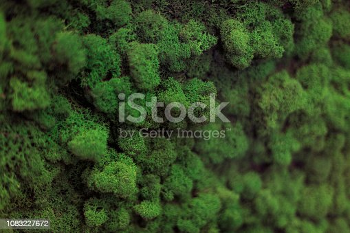 istock Wall of natural moss texture 1083227672