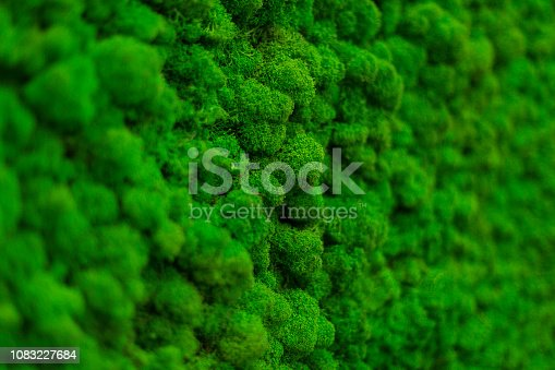 istock Wall of natural moss texture 1083227684