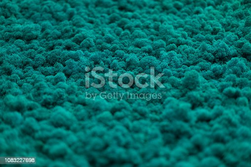 istock Wall of natural moss texture 1083227698