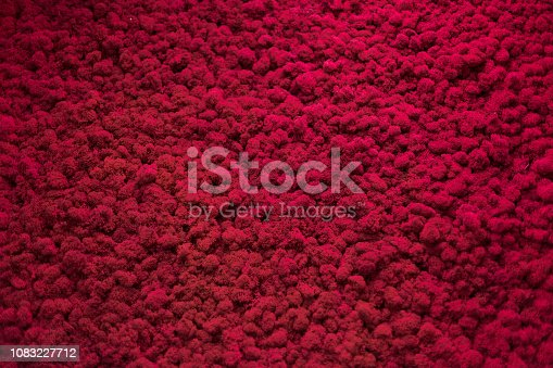 istock Wall of natural moss texture 1083227712