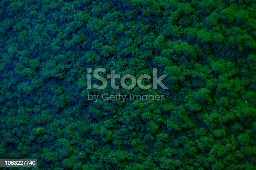 istock Wall of natural moss texture 1083227740