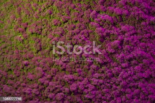 istock Wall of natural moss texture 1083227746