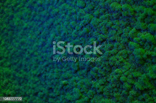 istock Wall of natural moss texture 1083227770