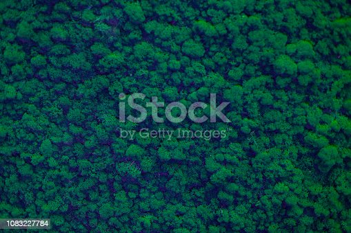 istock Wall of natural moss texture 1083227784