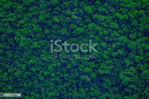 istock Wall of natural moss texture 1083227786