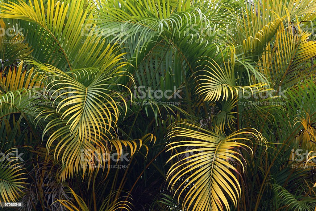 Mur de Palm Branches photo libre de droits