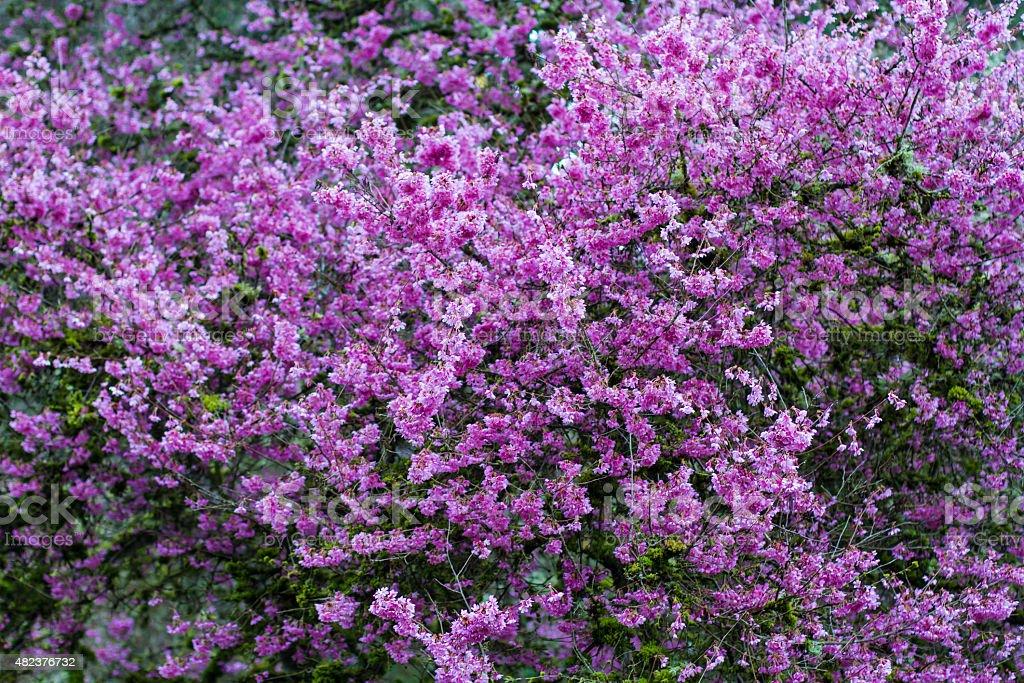 Wall of Purple Flowers stock photo