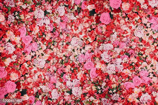 Wall of red and pink roses. Many flowers.