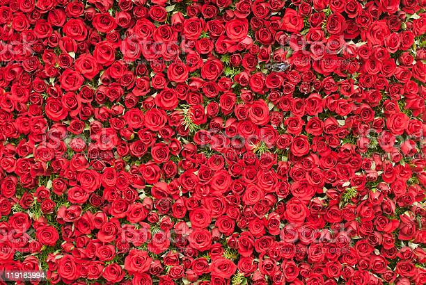 Wall of roses picture id119183994?b=1&k=6&m=119183994&s=612x612&h=lfs8shajemcjsqci  byjc5nws4bakcn9lu hprktbc=