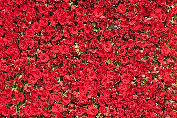 Wall of roses picture id119183994?b=1&k=6&m=119183994&s=612x612&w=0&h=c3i5bf9zg24camkqyaq5ije qxn1b wxp5e1evxdk64=