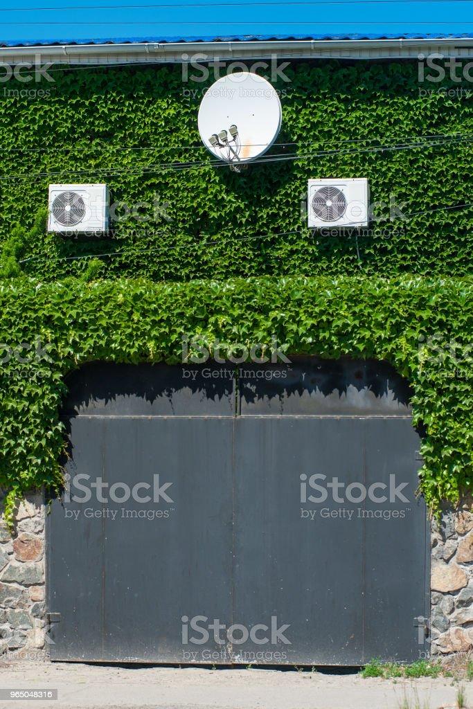 wall overgrown with grapes zbiór zdjęć royalty-free