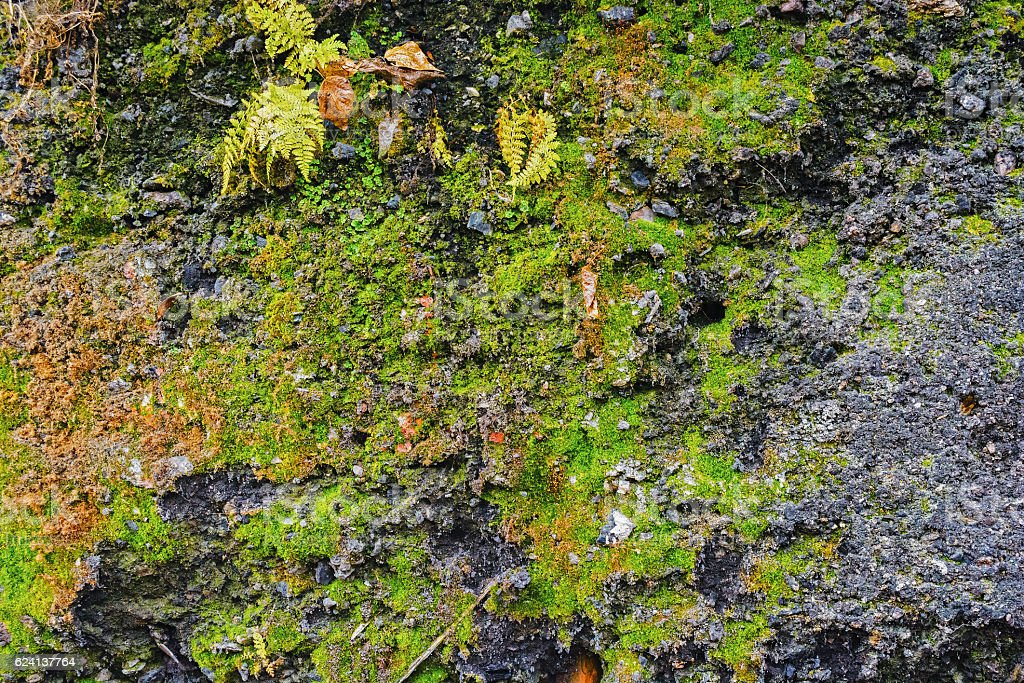 Wall overgrown with moss stock photo