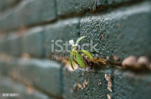 istock wall 529100311