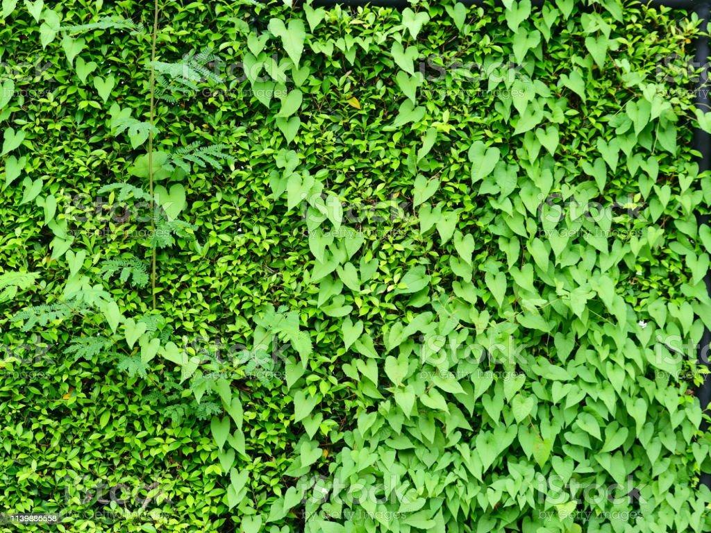 Wall Textured Green Vertical Garden Background Stock Photo