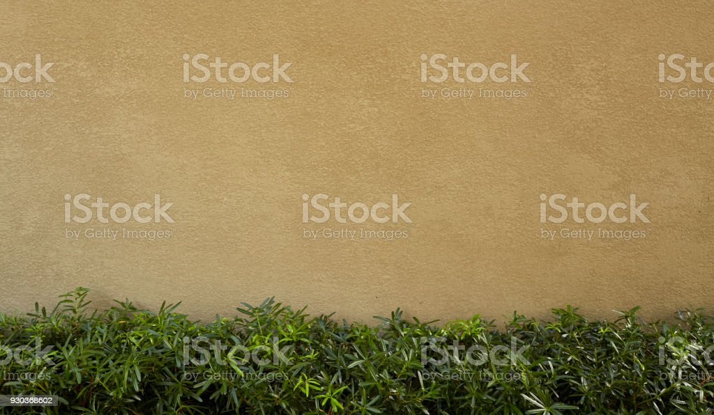 Wall Tree and green leaf background Texture stock photo