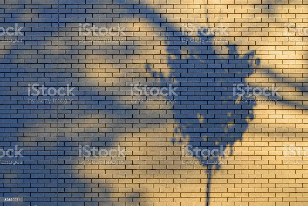 Wall Tree Shadow royalty-free stock photo