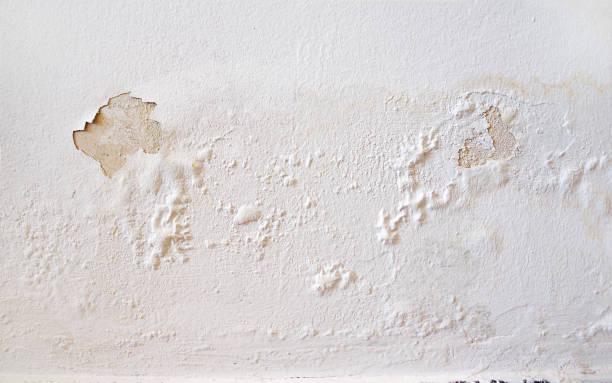 muur wit - meeldauw stockfoto's en -beelden