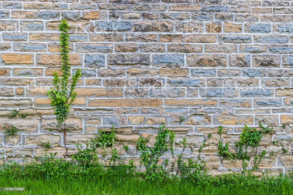 Wall With Colored Bricks Plants Growing In The Grass Stock Photo Download Image Now Istock
