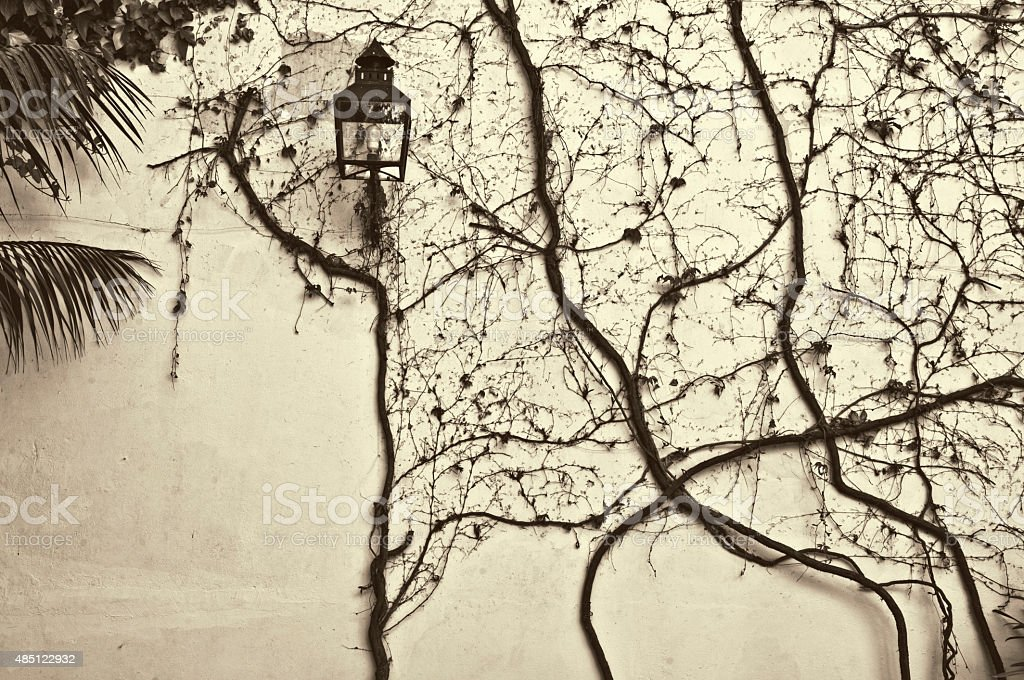Wall with creeper and lantern royalty-free stock photo