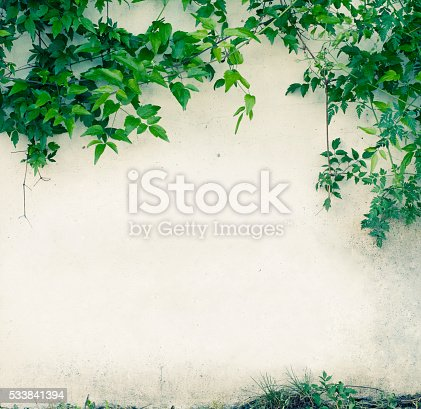 Green leaves and white wall with copy space