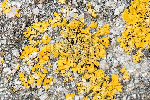 656168432 istock photo Wall with moisture and fungi 1137996411