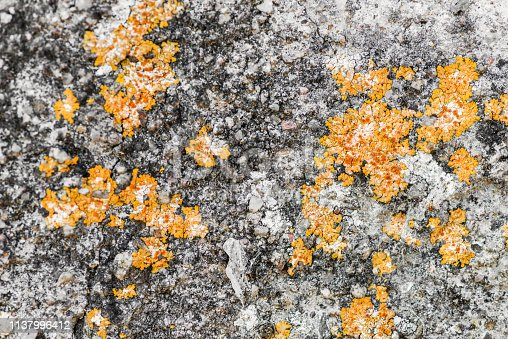 656168432 istock photo Wall with moisture and fungi 1137996412