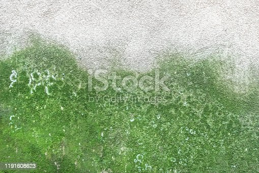 Mold and green moss on dirty concrete wall texture