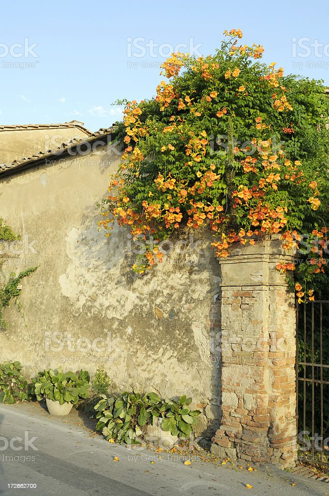 wall with orange flowers royalty-free stock photo