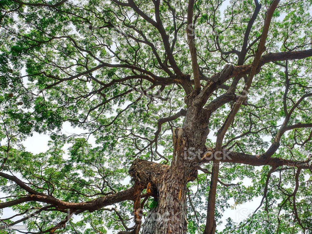 Layout of the tree.wallpaper of branches and leaves.twig and leaf...