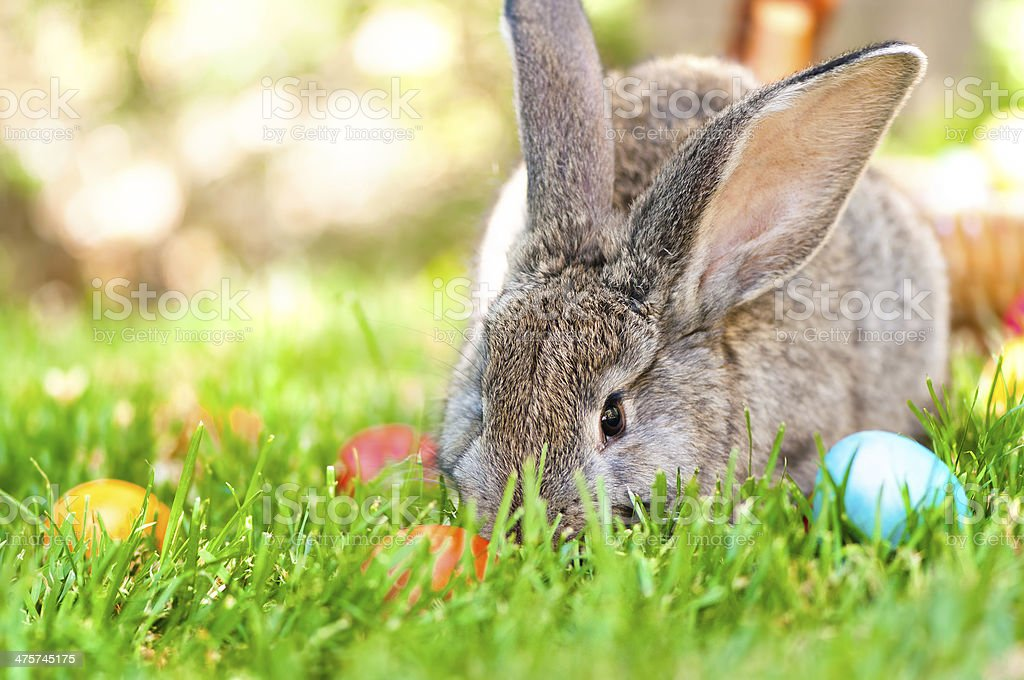 wallpaper of little bunny smiling with Easter eggs and spring stock photo