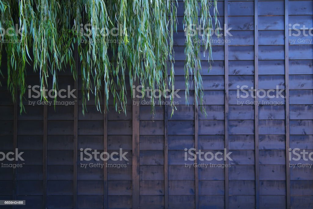 Walls and willow foto stock royalty-free