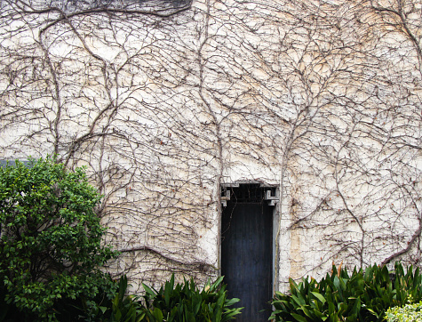 Walls covered with vines