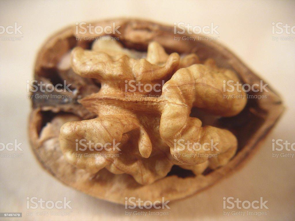 walnut closeup royalty-free stock photo